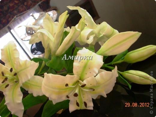 я НАКОНЕЦ!!!!! Моя первая Лилия!!!!! Первый цветок который мне подарил мой султан!))))))))))) фото 2