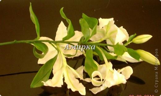я НАКОНЕЦ!!!!! Моя первая Лилия!!!!! Первый цветок который мне подарил мой султан!))))))))))) фото 4