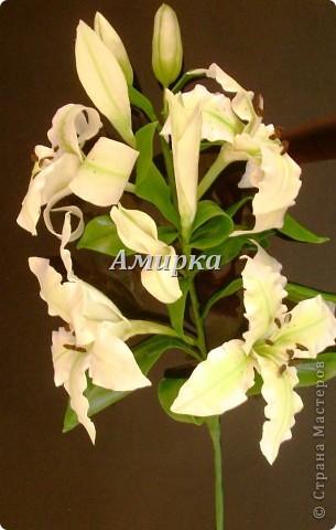 я НАКОНЕЦ!!!!! Моя первая Лилия!!!!! Первый цветок который мне подарил мой султан!))))))))))) фото 1