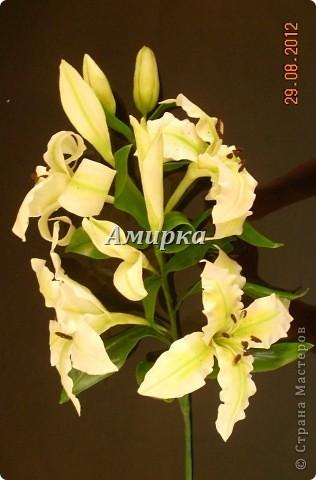 я НАКОНЕЦ!!!!! Моя первая Лилия!!!!! Первый цветок который мне подарил мой султан!))))))))))) фото 3