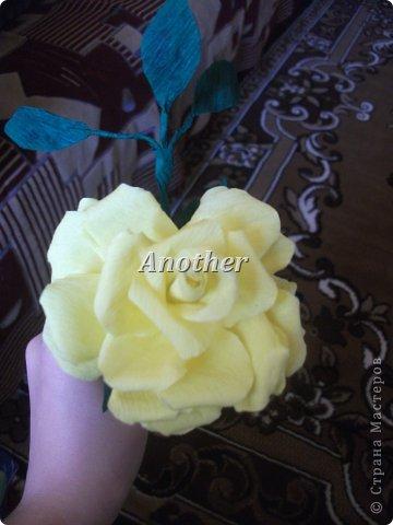 мои розы,выкладываю на ваш суд так сказать!=) фото 2