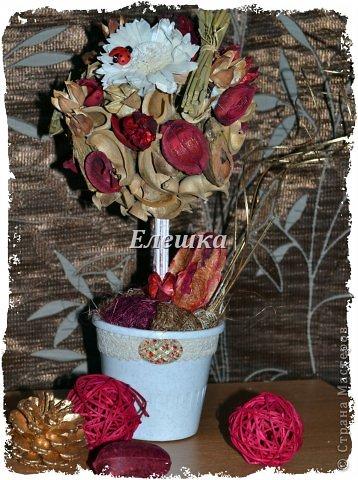 Вот такое деревце из сухих растений и фруктов (из наборов поппури с ароматами розы и корицы) вырастила я сегодня, высота 29 см, диаметр кроны 13-14 см. фото 1