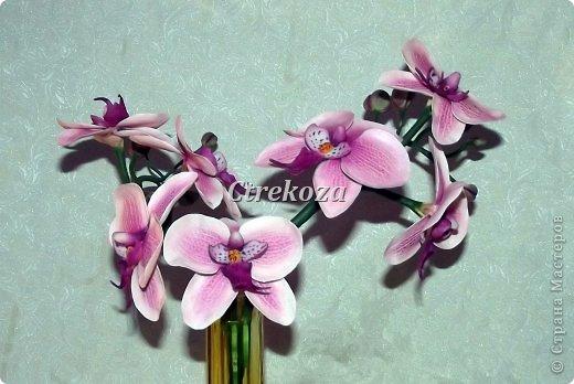 орхидеи из полимерной глины в спб