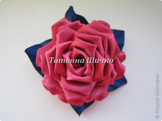немного роз фото 4