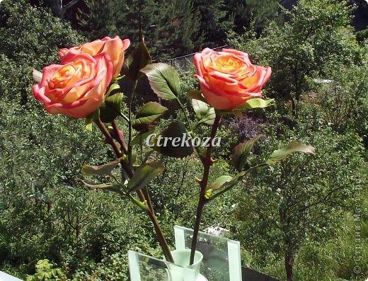 Розы из полимерной глины. фото 4