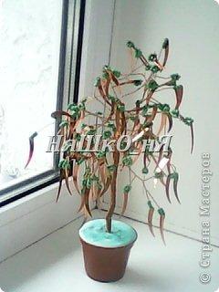 вот мое дерево с перчиками фото 7