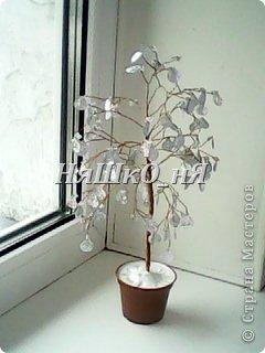 вот мое дерево с перчиками фото 16