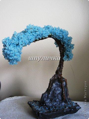 Голубой бонсай фото 1