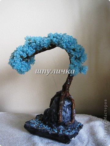 Голубой бонсай фото 2