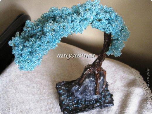 Голубой бонсай фото 4