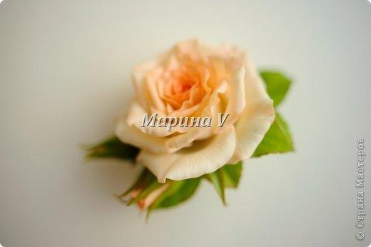 Мне кажется, розы можно лепить бесконечно и скучно не будет) Они всегда получаются по-разному. И так интересно подбирать новые краски,оттенки, полу-тона...  фото 2