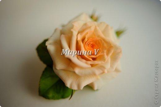 Мне кажется, розы можно лепить бесконечно и скучно не будет) Они всегда получаются по-разному. И так интересно подбирать новые краски,оттенки, полу-тона...  фото 3