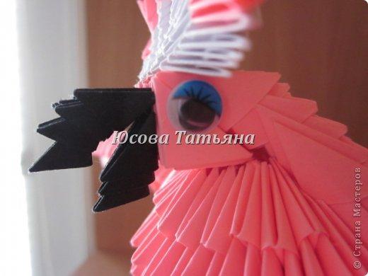 Розовый попугай фото 3