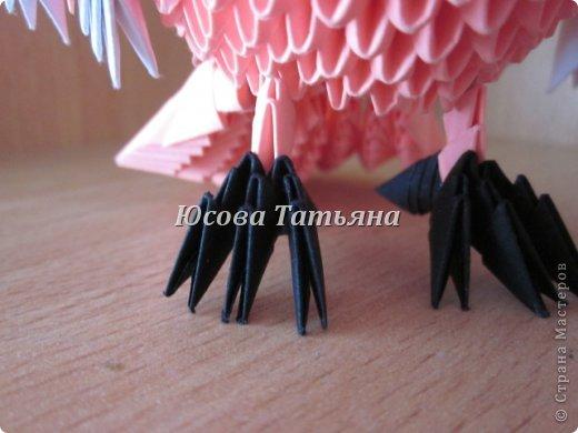Розовый попугай фото 7