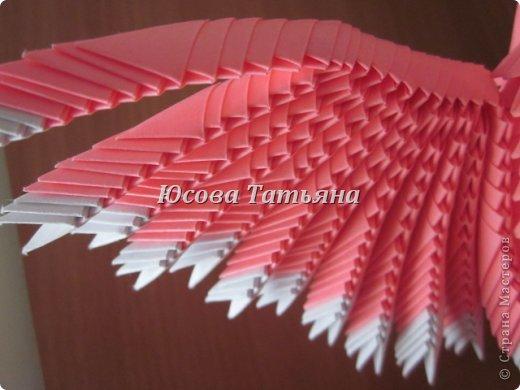 Розовый попугай фото 4