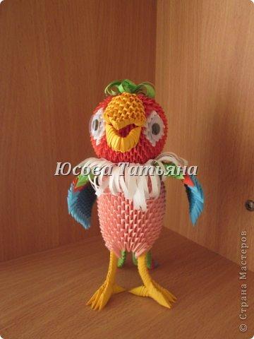 попугая Бумага фото 1