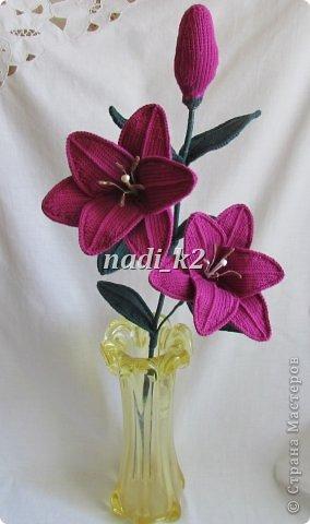 Мои лилии фото 2