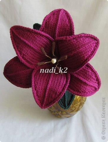 Мои лилии фото 5