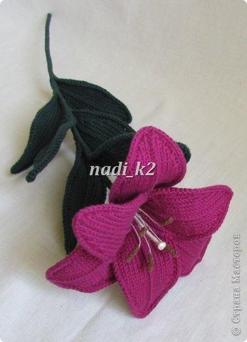 Мои лилии фото 7