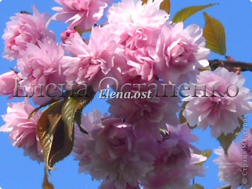Весна пришла цветущая. И я непременно радую себя красивой шалью в розовых тонах. Моя новая шаль Гейл - Gail shawl  by Jane Araújo. Связала из Gazzal EXCLUSIVE - 100 г. Спицы №3. Бисер использовала чешский. фото 9
