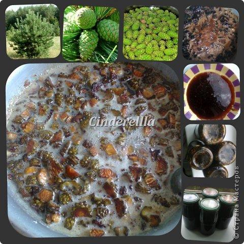 Кулинария Мастер-класс Рецепт кулинарный Даже шишечным вареньем я медведя угощу   Материал природный Продукты пищевые