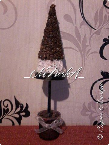 Деревце фото-коллаж фото 12