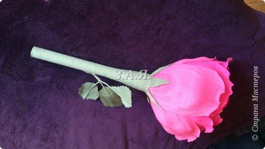 Роза-гигант. фото 4
