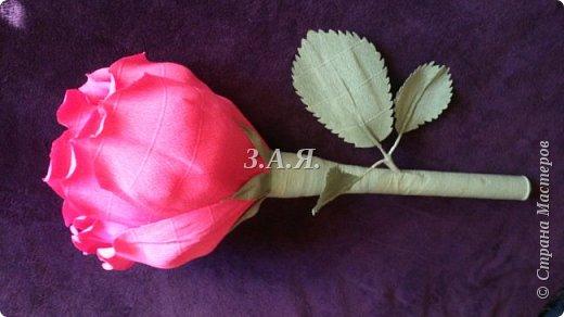 Роза-гигант. фото 3