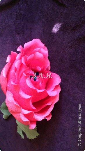 Роза-гигант. фото 2