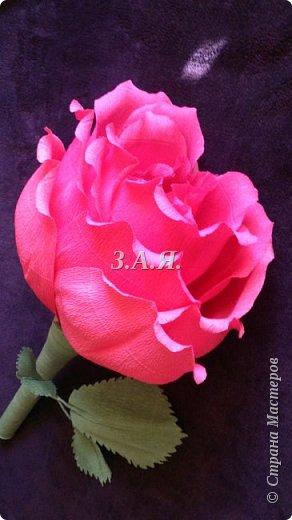 Роза-гигант. фото 1